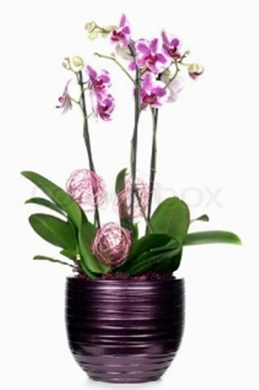 Vasi orchidea fioriere e vasi for Vasi per orchidee