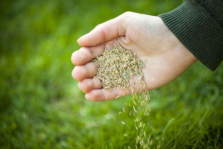 semina del prato
