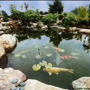 http://watergarden.com/home_images/KoiPond.jpg