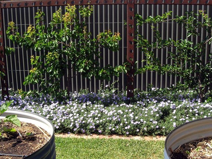 Grigliati in ferro grigliati per giardino tipologie di grigliati in ferro - Divisori per giardino ...