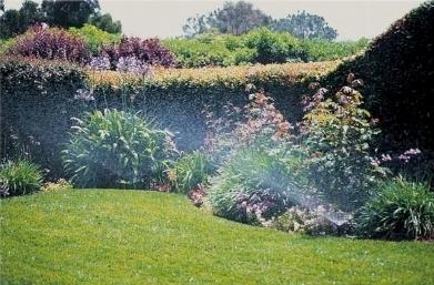 Progettazione impianto irrigazione interrato impianto - Impianto irrigazione giardino ...