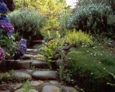 Sassi di fiume per giardini