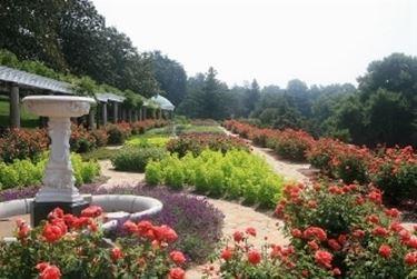 siepi giardino all'italiana