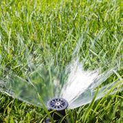 Gocciolatori impianto di irrigazione a goccia for Impianto irrigazione giardino progetto